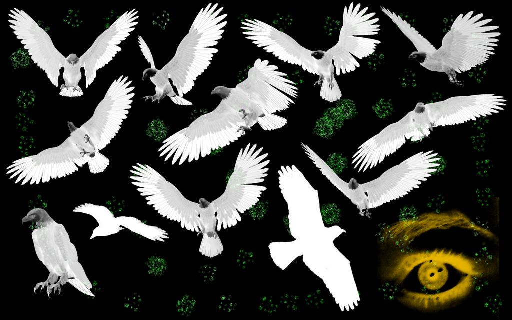 The White Eagle Wallpapers by thewhiteeagleWhite Eagle Wallpaper