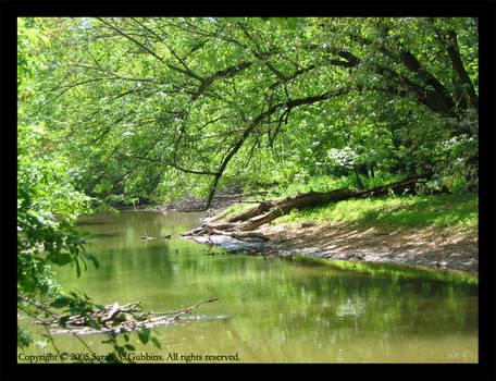 Misty River in Summer