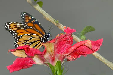 Butterfly perching on flower by Sparkler17