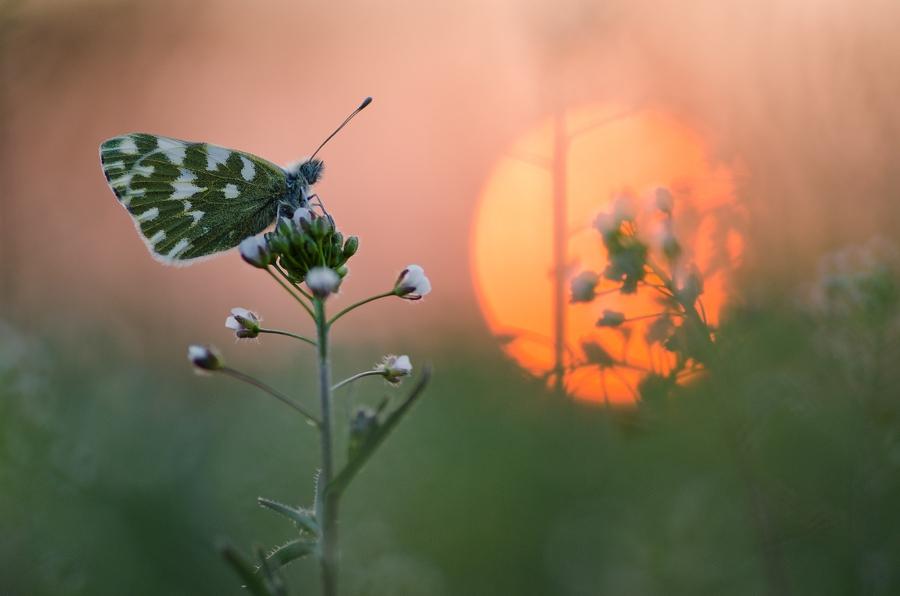 ~ sunset avenue ~ by MartinPrievalsky