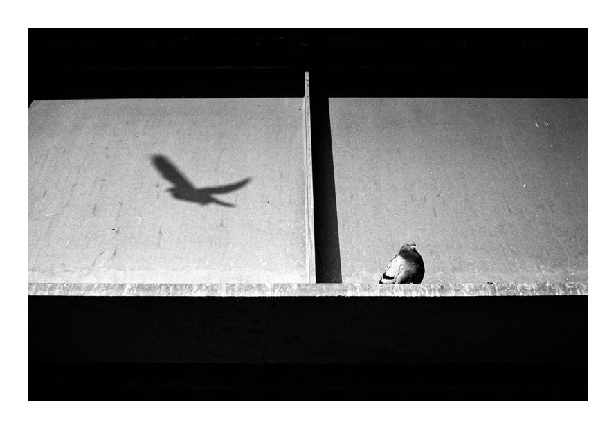 vi. by SimonSawSunlight