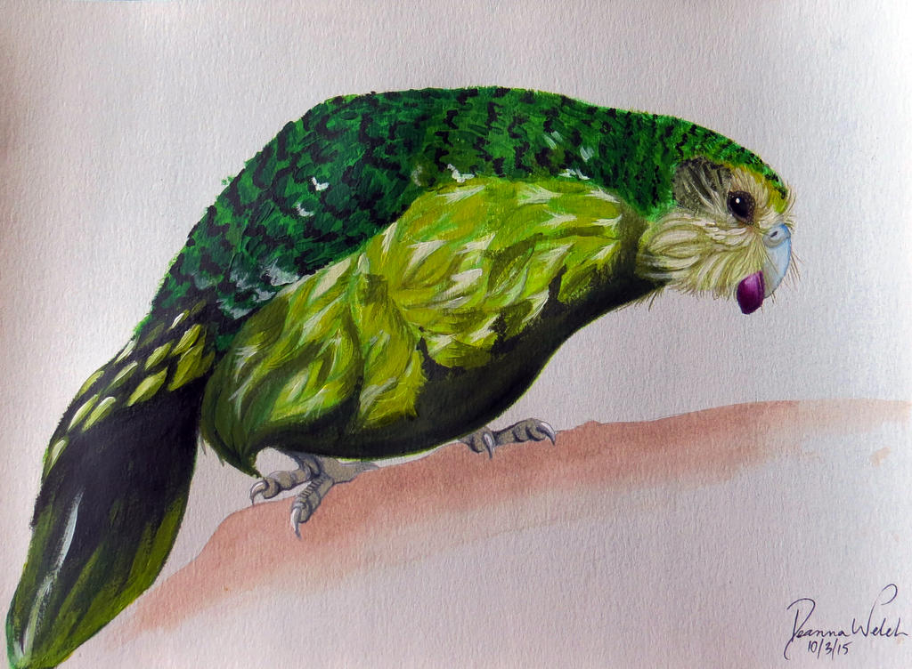 Kakapo by Drodengera on DeviantArt