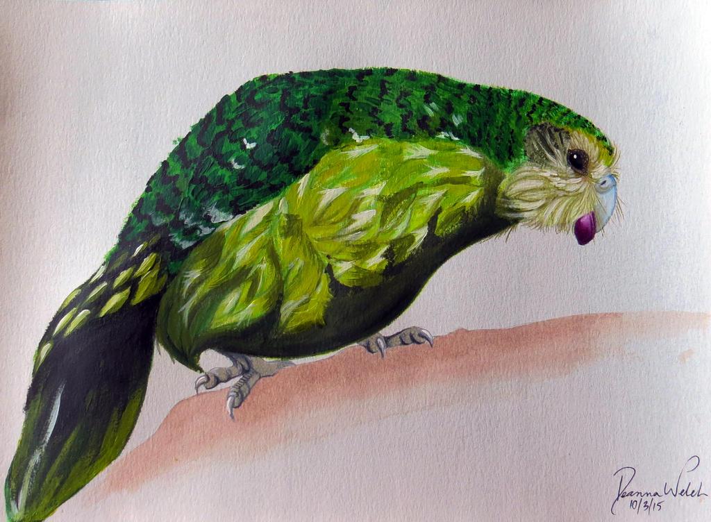 Kakapo by Drodengera on DeviantArt