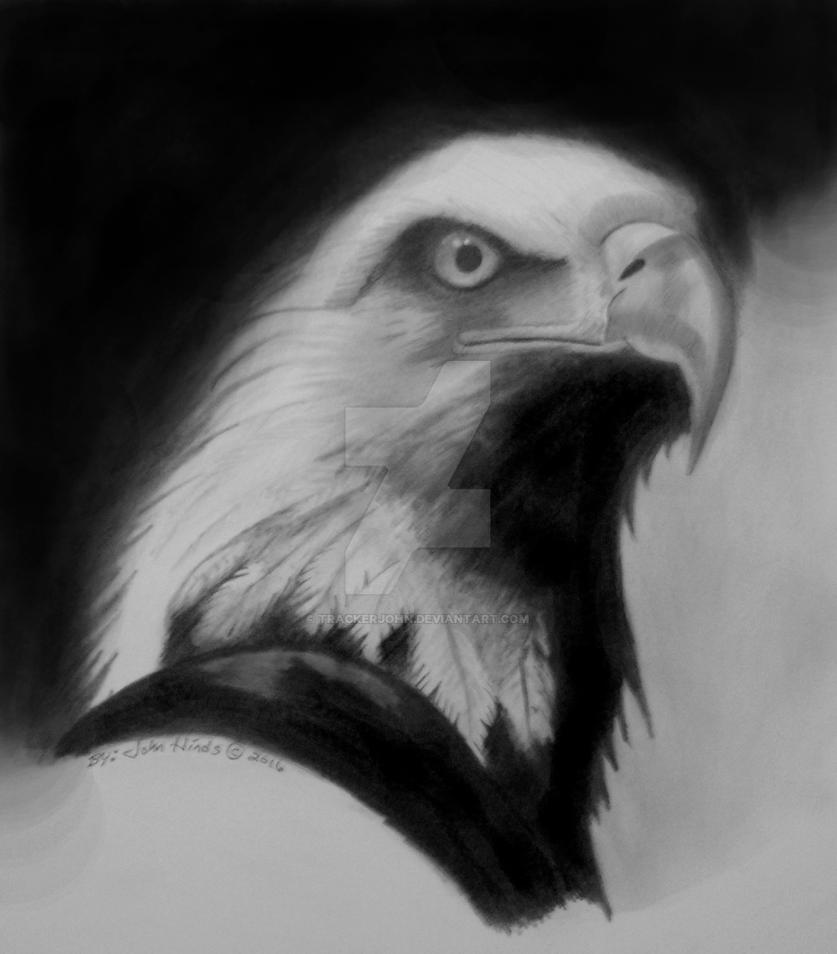 Eagle portrait by TrackerJohn