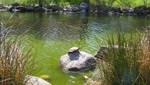 Turtle 2 by gurukitty
