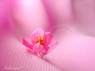 FLOWER - Harmony by onewordphoto
