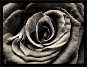 BLOOM - Continuum by onewordphoto