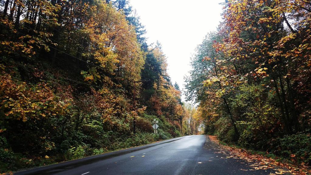 autumn_roads_by_ikuzimil-daqgtu0.jpg