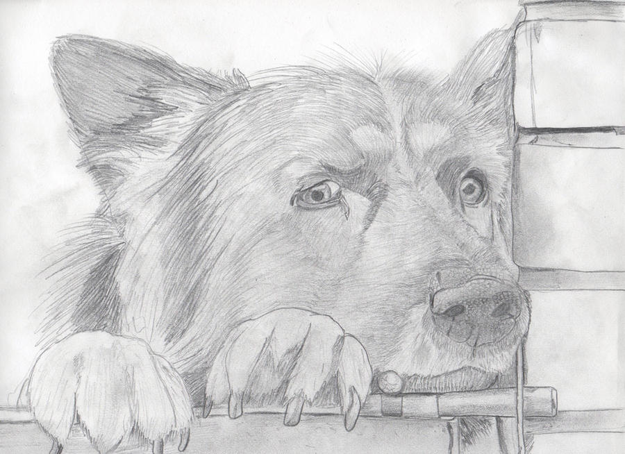 sad dog by NCIS413 on DeviantArt