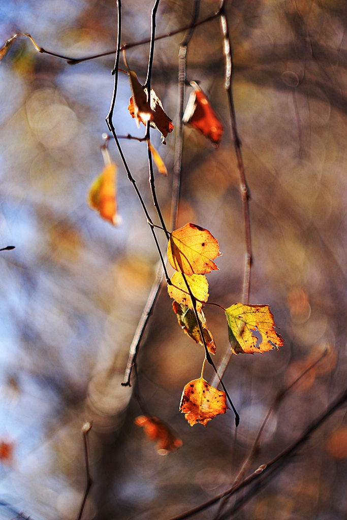 Leaves by anylife