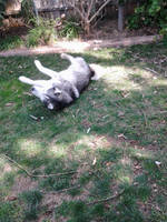 Mah Wolf by airquake