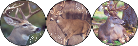 Buck [Divider] (Request) by I-Stamps