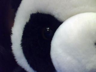 Panda-chan :3 by chuwii