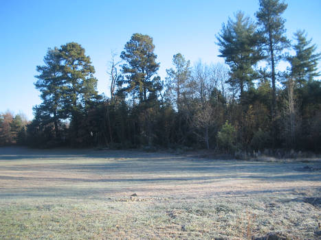 Landscape Stock 6
