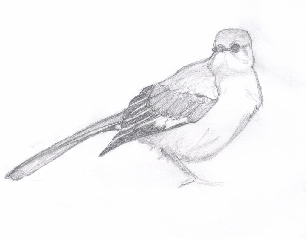 The Gallery For --u0026gt; Hummingbird Sketches