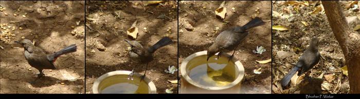 Bird Sequence