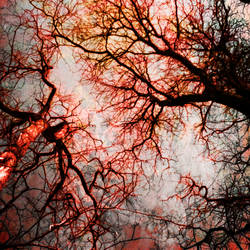 Veins in the body... by vonvanity