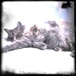 'Meow' by vonvanity