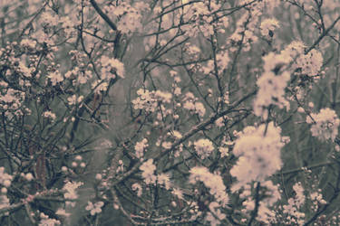 spring'13 by LeaHenning