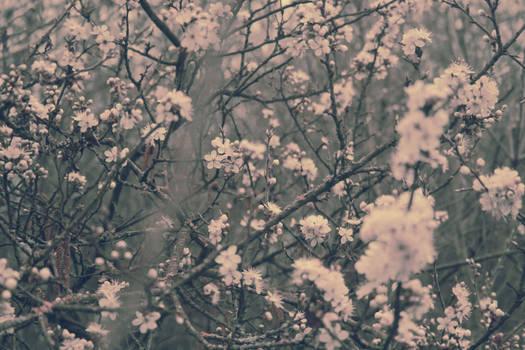 spring'13
