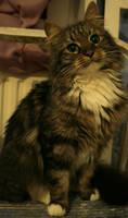 mila as a kitten II