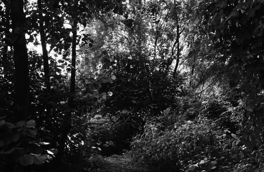 summer landscape II
