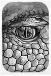 Day 2. Eye of snake