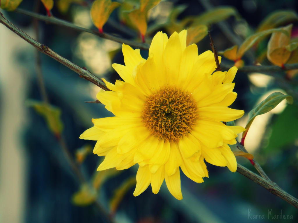 Sunflower by AresyaDesee