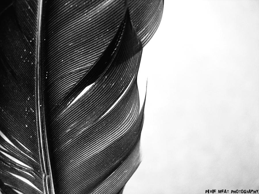 black feather by mrschaplin on deviantart