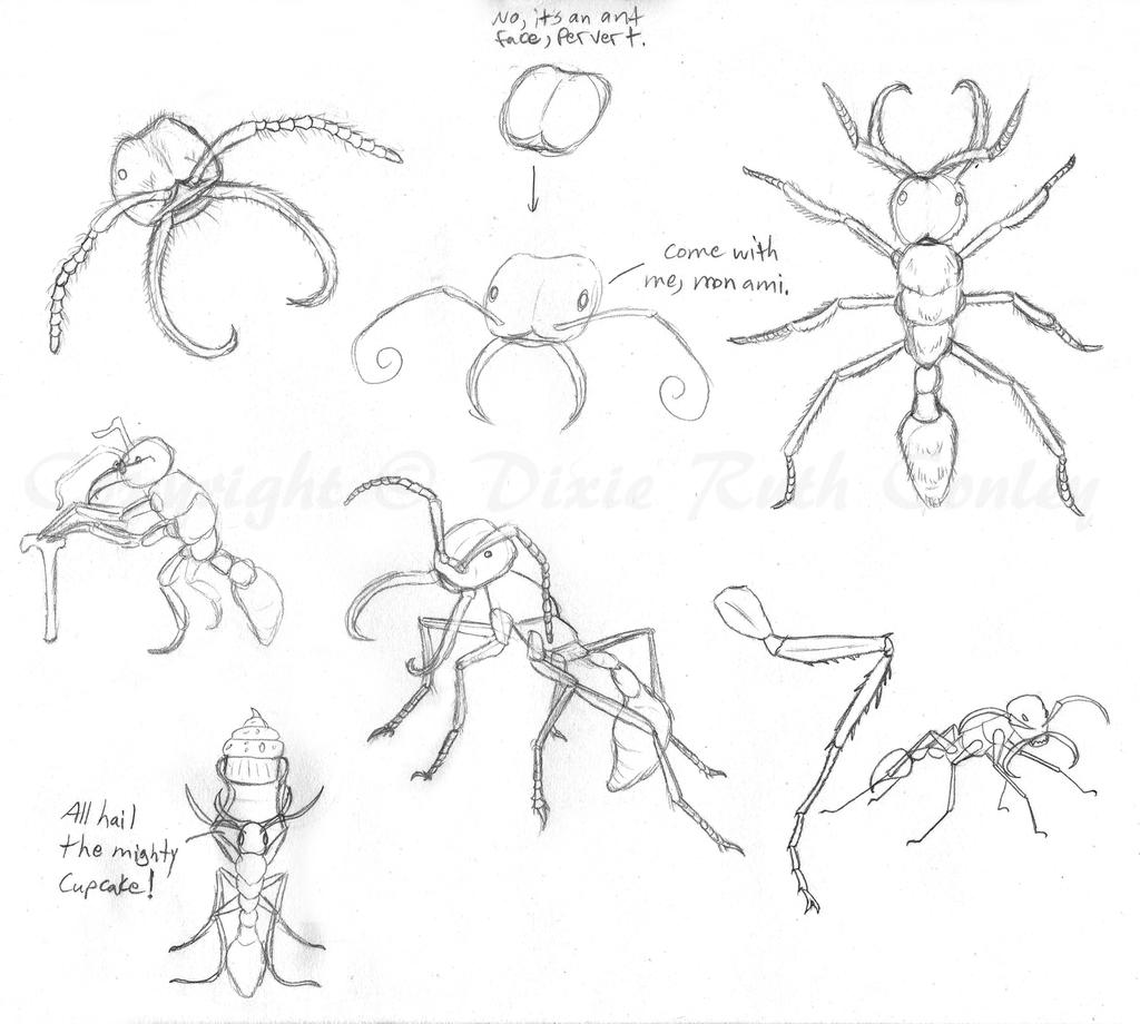 abc sketches amazon army ant by dracoflameus on deviantart