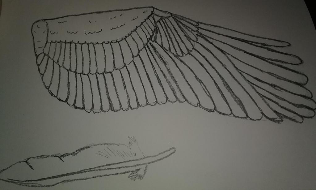 Wing concept P2 by FANDOM----TRASH