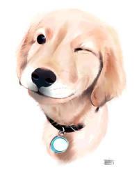 Dog Practice