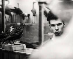 birds by mimiau