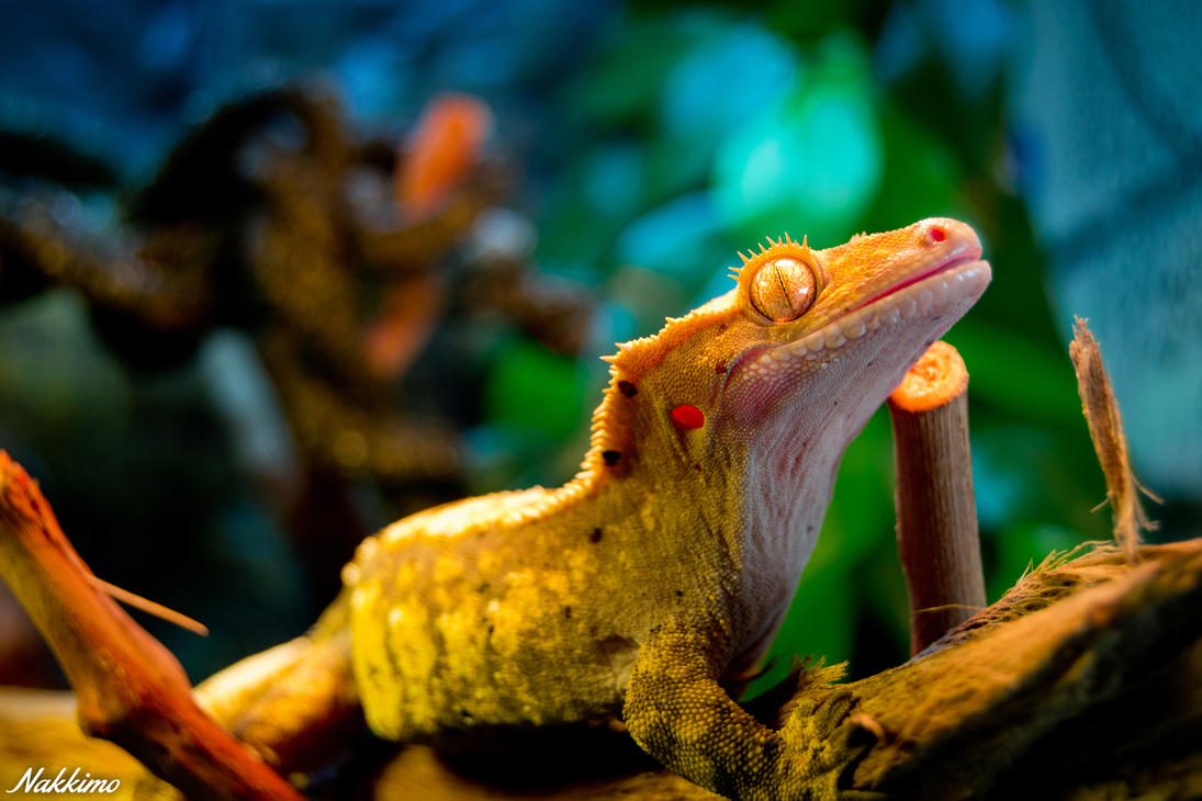 3840x2160 wallpaper lizard gecko - photo #37