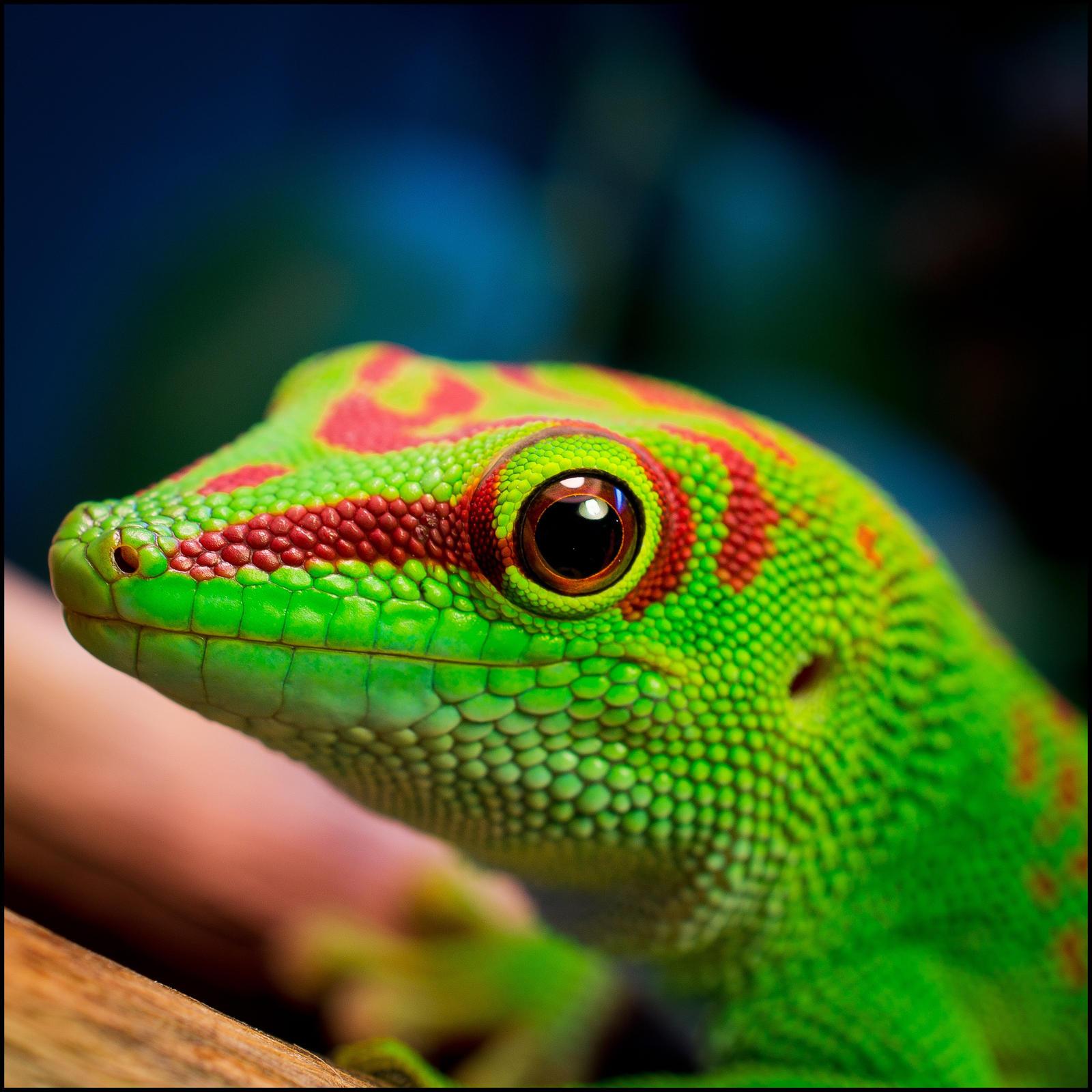 Happy lizard by nakkimo