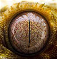 Eye by nakkimo