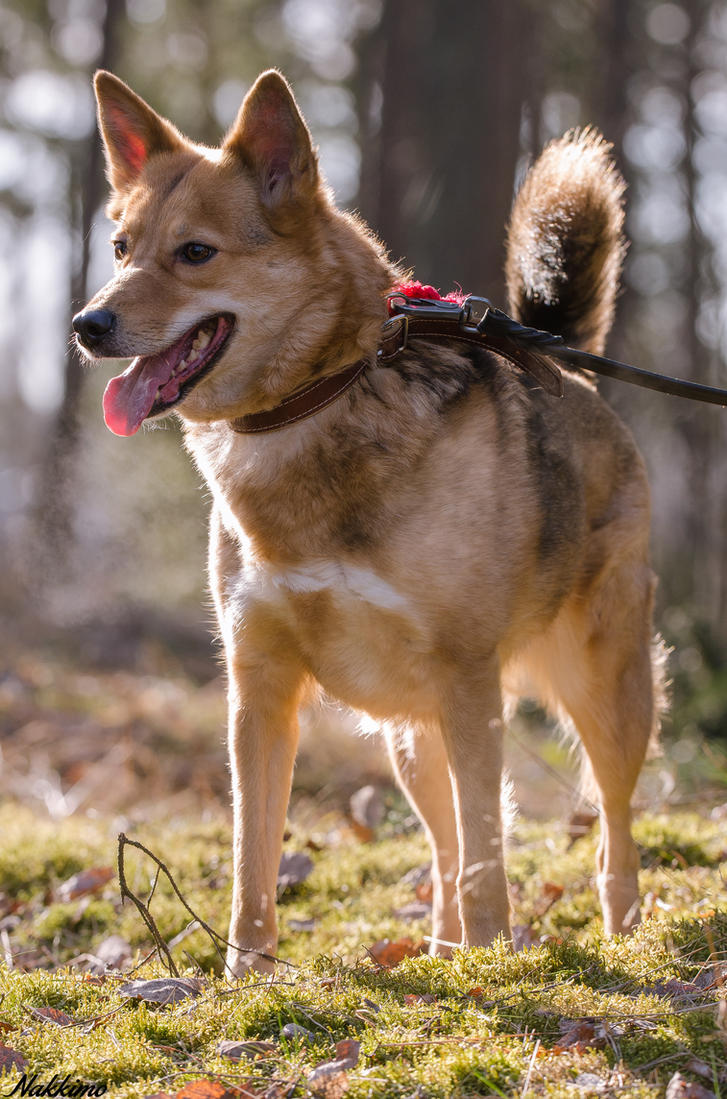 Dog by nakkimo