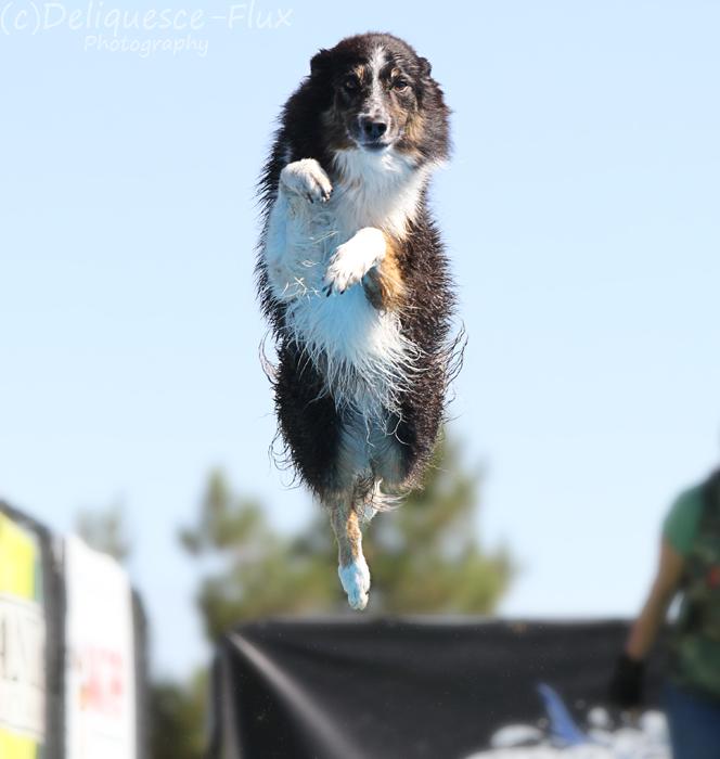 Splash Dogs 9 by Deliquesce-Flux