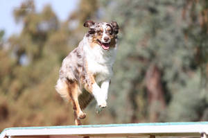 AKC March Agility Trial 2 by Deliquesce-Flux