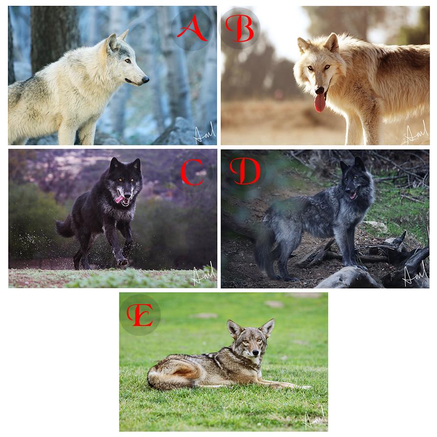 Wolf Series Prints by Deliquesce-Flux