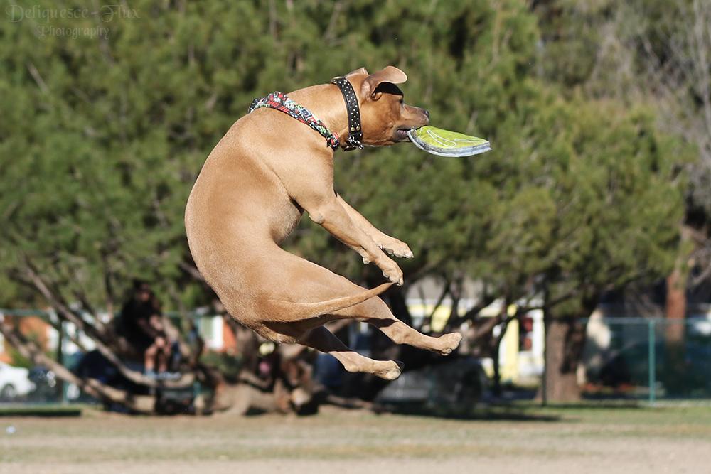 Frisbee Pit by Deliquesce-Flux