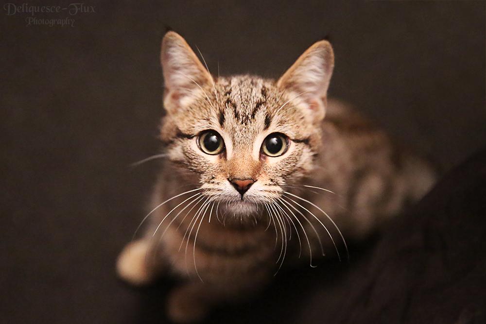 Nergal the Kitten by Deliquesce-Flux