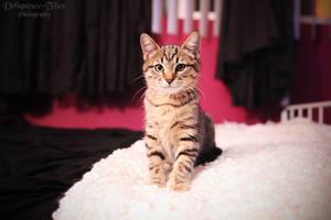 Nergal the Kitten II by Deliquesce-Flux