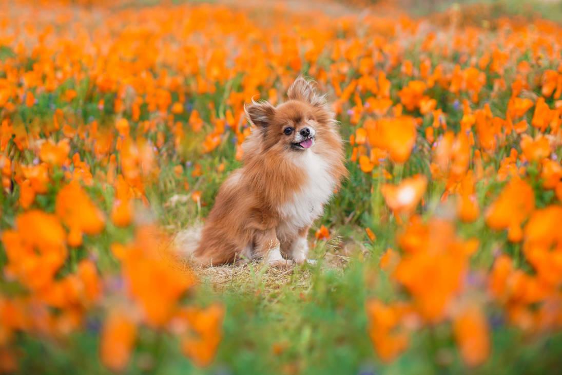 Spring Portrait I by Deliquesce-Flux