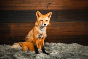 Viktor the Fox