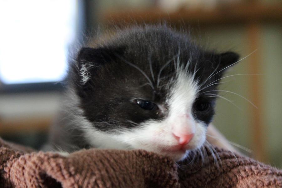 Pretty Kitty by ISeeThroughMyEyes