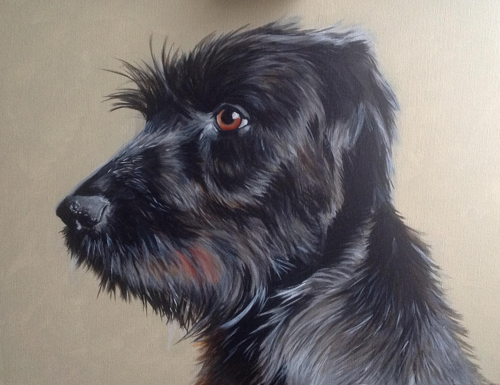German Wire Haired Pointer by SheenaBeresford on DeviantArt
