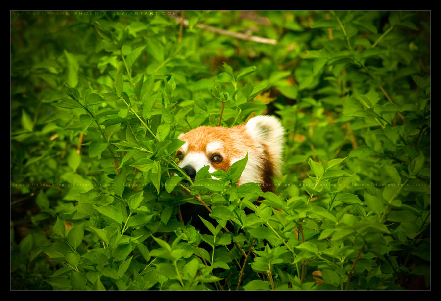 Peeking from the Leaves 2 by Flame-of-the-Phoenix