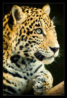 Jaguar Cub: Profile by Flame-of-the-Phoenix