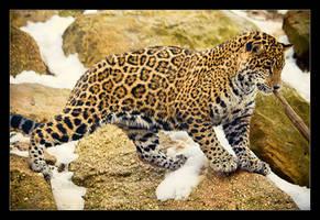 Jaguar Cub: After a Swim by Flame-of-the-Phoenix